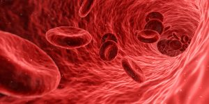 Red blood cells in a vein